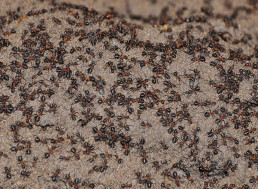 Trapped in a Nuclear Bunker, Wood Ants Turned to Cannibalism to Survive