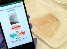 New E-Nose Sniffs Out Funky Smells to Prevent Wasting Food