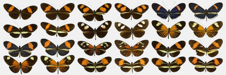 ButterflyNet: AI Validates the First Mathematical Model of Evolution
