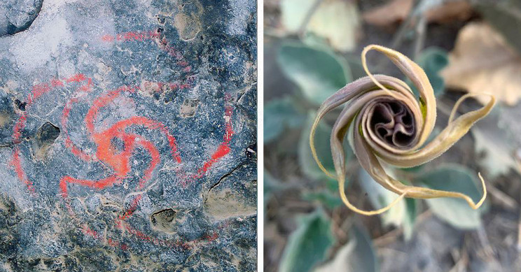 Native Californians Got High on Plants and Painted Cave Art, Study Says