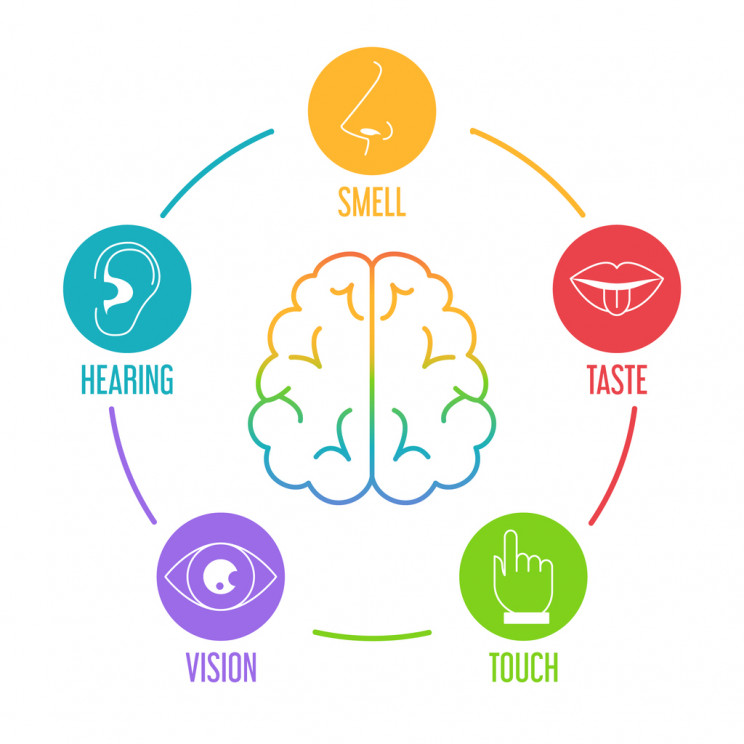 sensorial organs