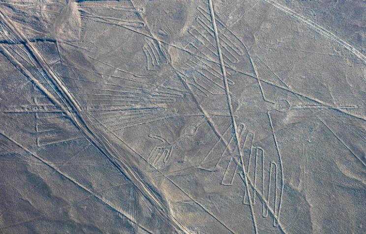 Nazca condor