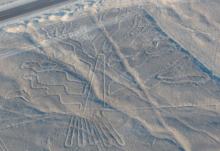 Nazca tree