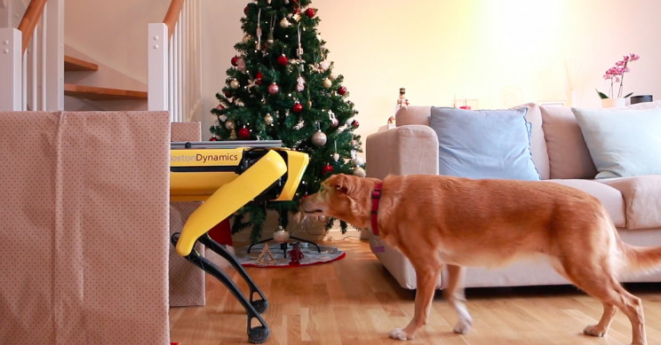 Spot the Robot Melts Christmas Blues of Lonely Dog