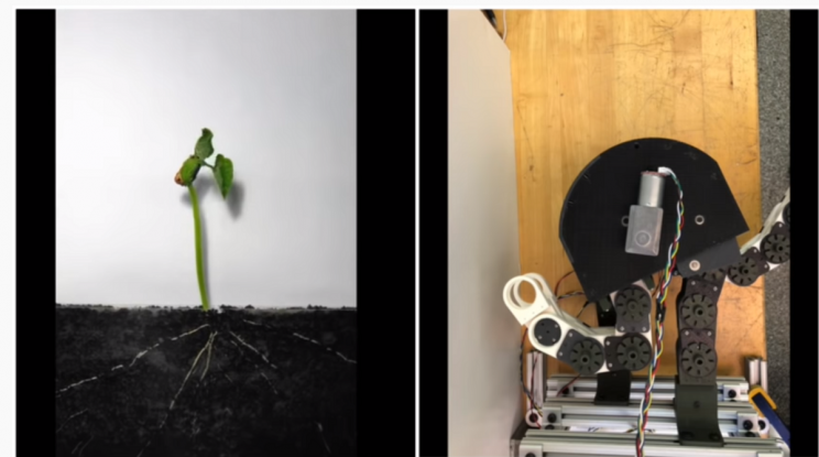 Engineers Develop Flexible Robot That Can Twist and Turn