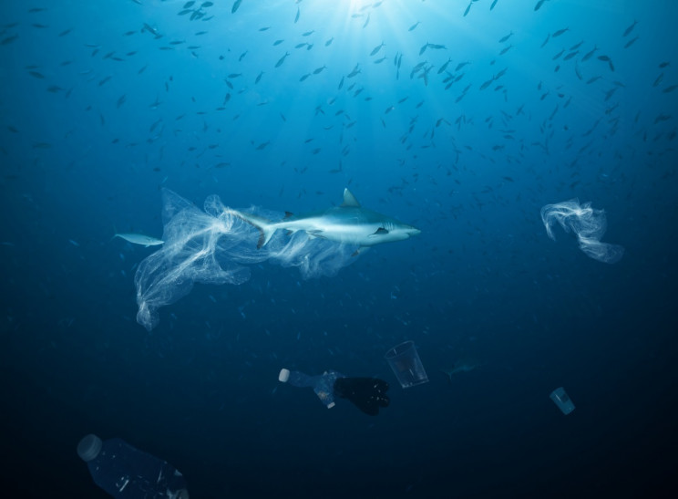 Hundreds of Sharks, Rays Ensnared In Plastic