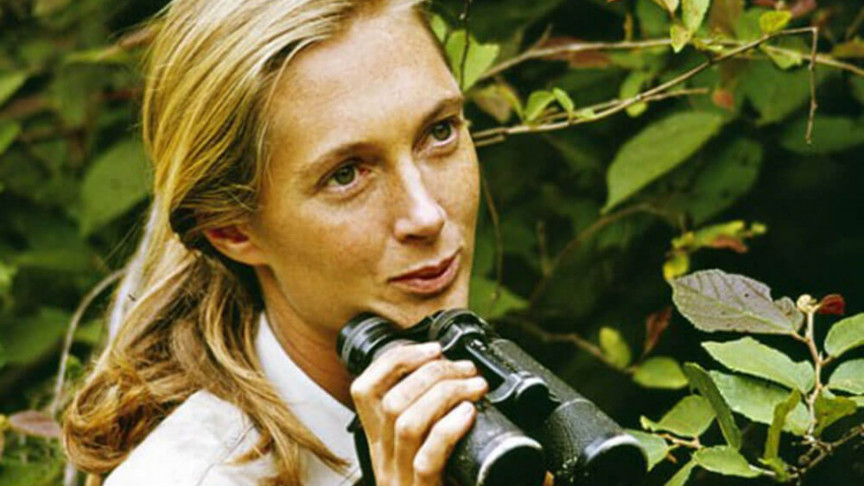 How Jane Goodall Changed Our Perspective of Chimps