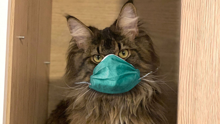 Study Confirms You Can Infect Your Cat With COVID-19