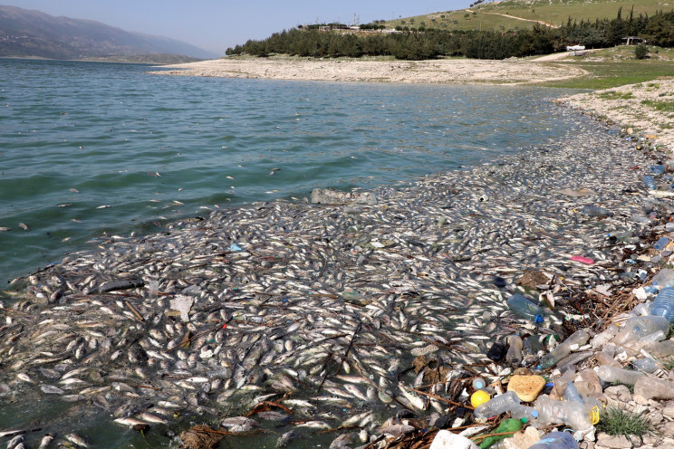 Tons of Dead Fish Engulf Lebanese Village in a Pungent Odor