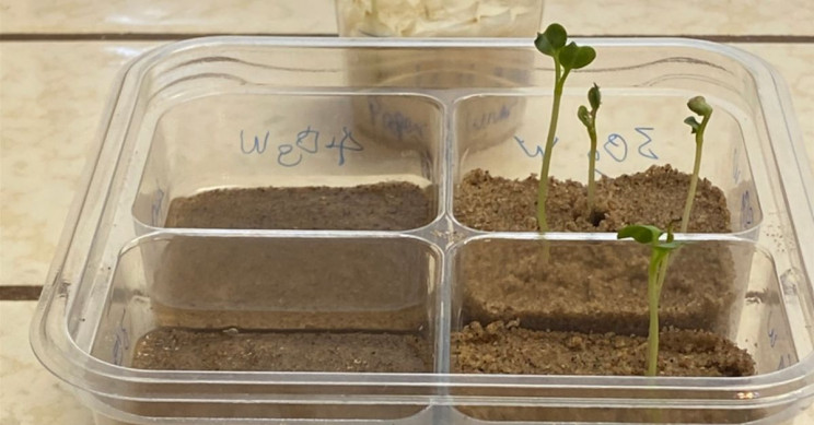 It's Possible to Grow Radishes on the Moon, Finds NASA Scientist
