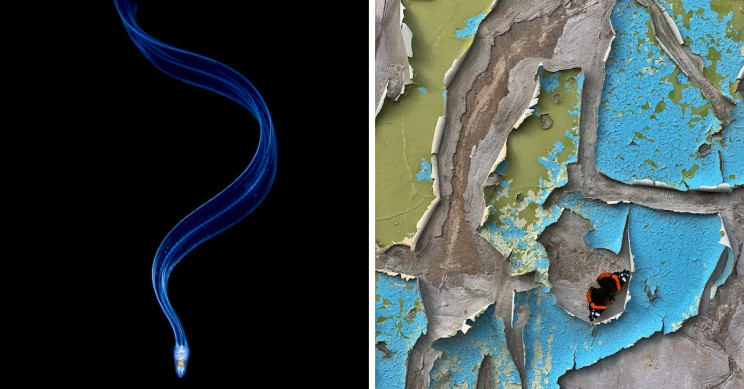 These 7 Winners of the Close-up Photographer of the Year Will Leave You Dazzled