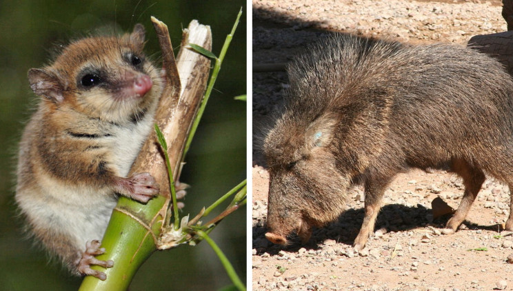 7 Species That Came Back From the Dead: The Lazarus Effect