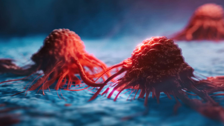 Study Explores Using a Body's Own Immune System to Fight Cancer