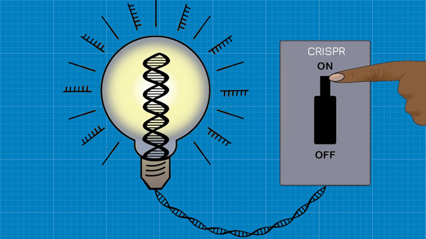 Scientists Created an 'On-Off Switch' for Gene Editing | IE - Interesting Engineering