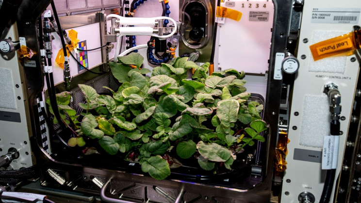 Growing Plants in Alien Soil: How Will Future Missions Feed Astronauts