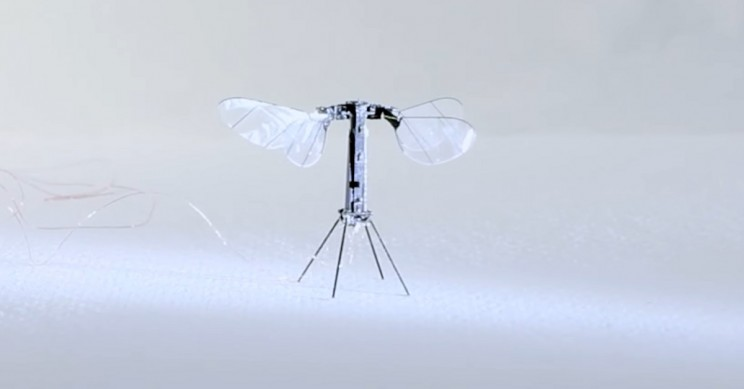RoboBee Flies Untethered for First Time, Lightest Vehicle Ever to Do So