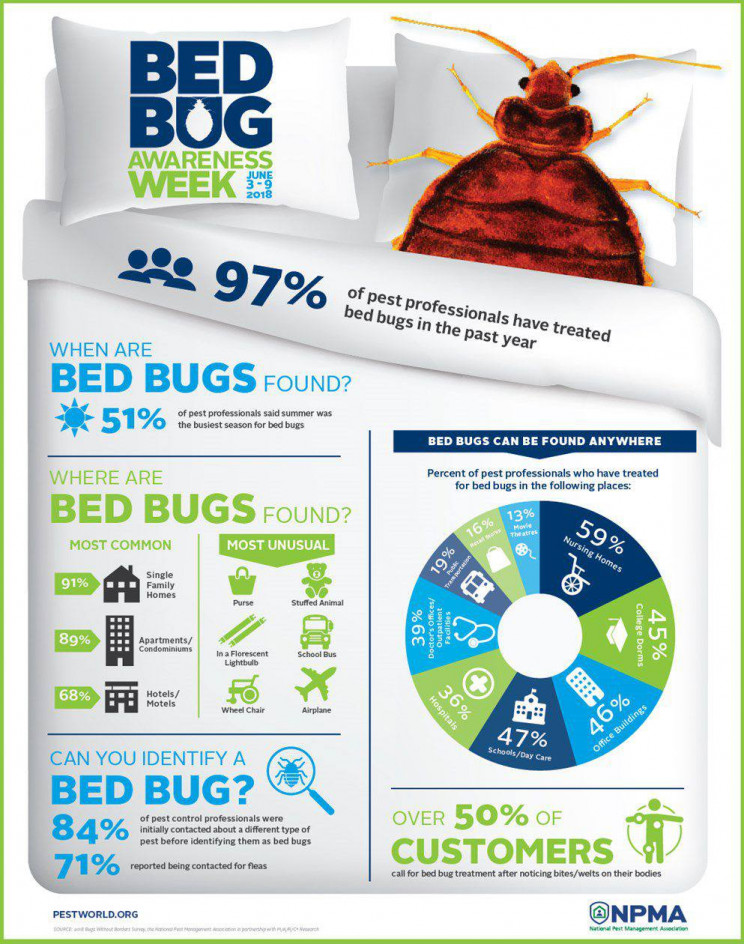 bed bugs infographic