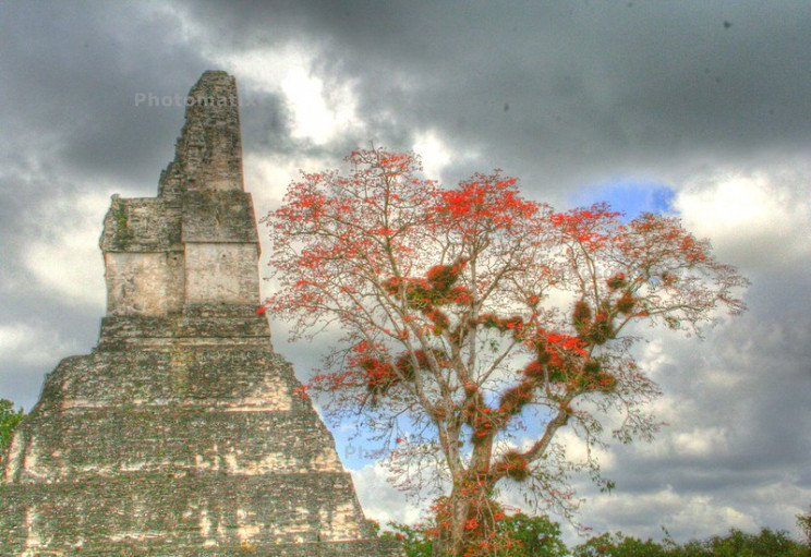 lost and found cities Tikal