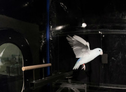 Birds Use Drag to Takeoff in New Study