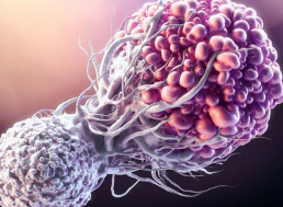 "Never-Seen-Before Immune Cell Discovery Could Become ""Universal"" Cancer Treatment"