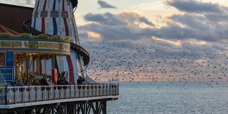 offshorew wind and birds