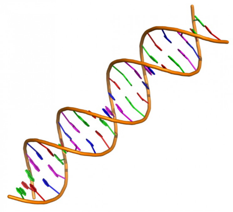 DNA's double helix