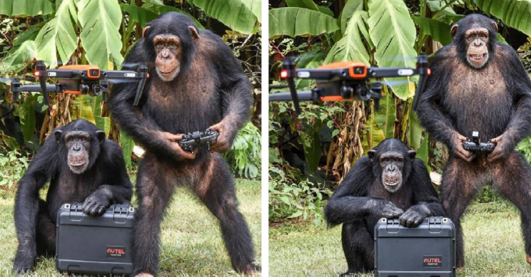 Apes Spotted Flying Drone and Smiling