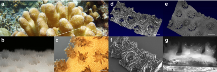 3D Printed Corals Could Be the Future of Bioenergy