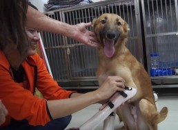 How Technology is Improving the Lives of Animals