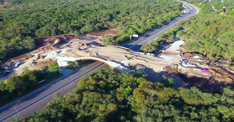 America's $23 Million Largest Wildlife Crossing Opens in Texas