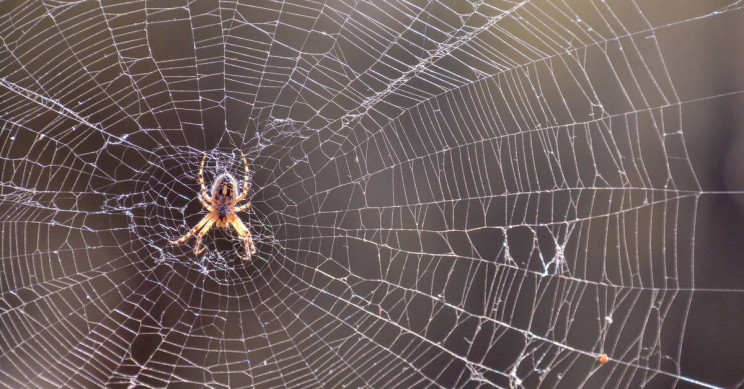 Some Spiders Tie up Females Before Mating to Avoid Being Eaten, Study Shows