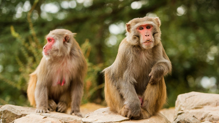 First Death Reported in China After Monkey B Virus Infection