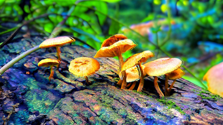 Psychedelic Mushrooms Can Regrow Brain Tissue Lost in Depression