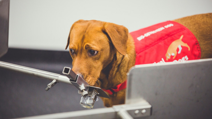 New Device Sniffs Out Diseases Just Like Medical Detection Dogs