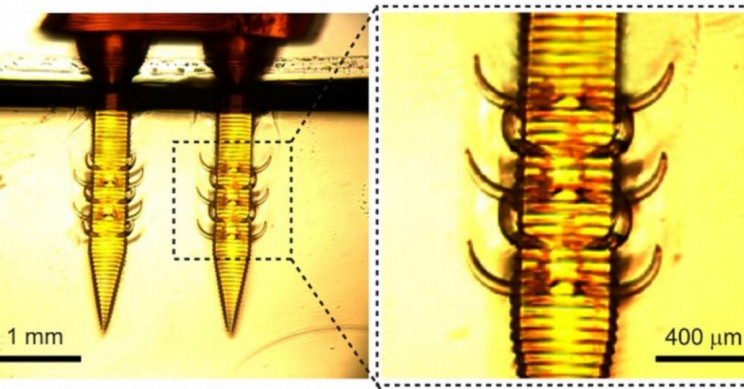 3D Printed Animal Stinger Needles Might Make Human Injections Less Painful
