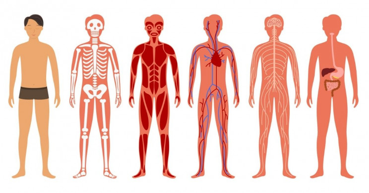 'Google Maps for the Body' Is In the Making