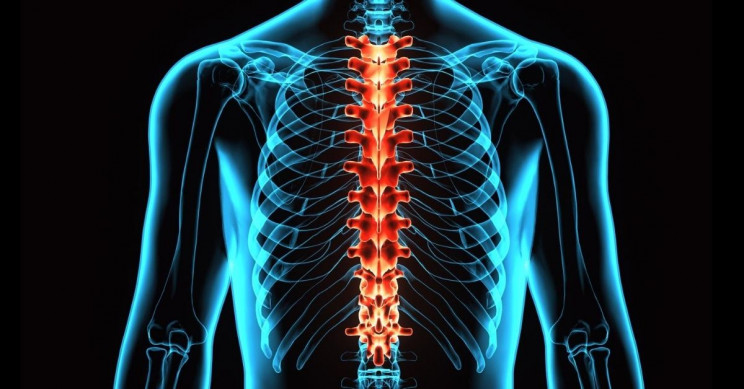 Implanted Neural Stem Cell Grafts Work in Spinal Cord Injuries