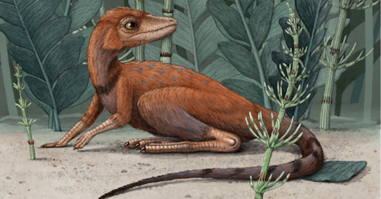 Scientists May Have Discovered the Ancestor of Dinosaurs in Madagascar