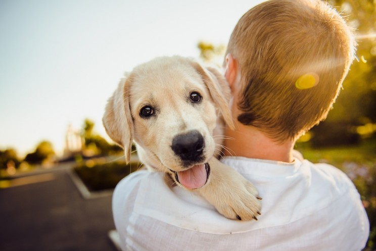 Cute by Design: A Scientific Explanation for the Puppy Dog Face