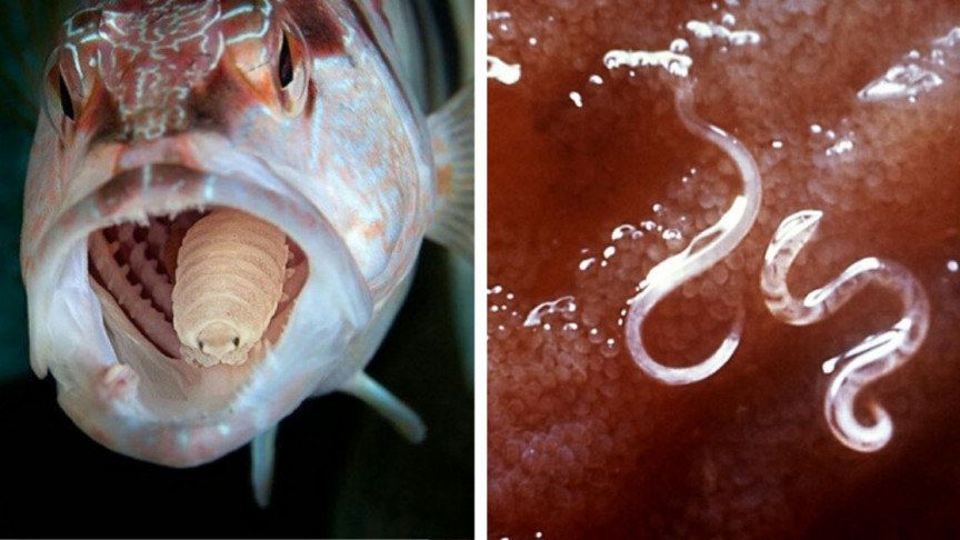 Image of article '11 Disturbing Parasites That Will Keep You Up at Night'