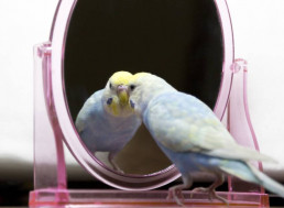 Birds Are Intelligent and Perhaps Even Self-Aware, Their Brains Reveal