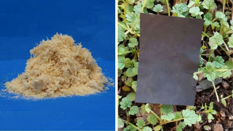 Scientists Create Biomass-Based Plastics from Wood