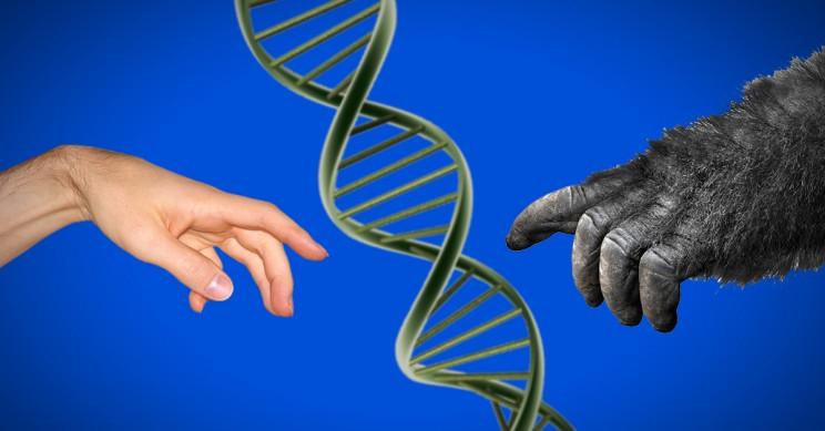 species lifespan speciation