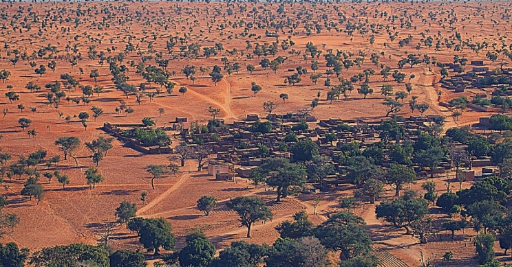 AI Has Discovered Nearly 2 Billion Trees in the Sahara Desert