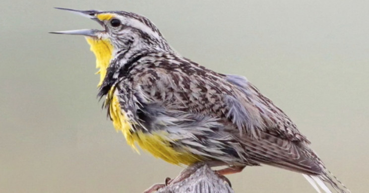 Almost 3 Billion Birds in North America Have Disappeared since 1970