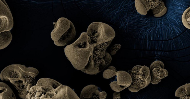 Metal-Eating Bacteria Discovered by Accident on Dirty Glass