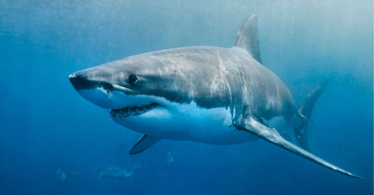 Shark and Ray Populations Have Declined 71% Since 1970