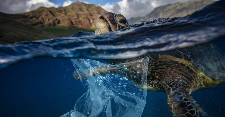 There is an Urgent Need to Clean Up Our Oceans