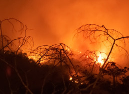 NASA Says Amazon Fires Were Also Fuelled by Water-Stressed Plants