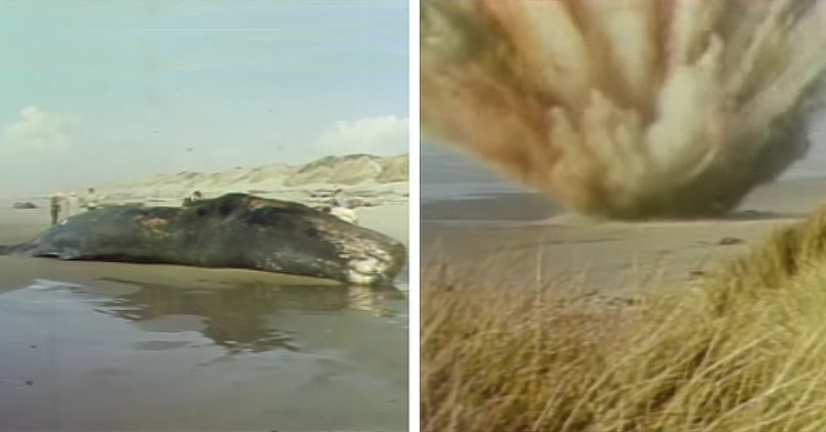 British Town Uses Oregon's 'Exploding Whale' Fiasco to Teach Physical Distancing